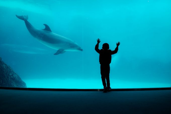 Photo of New education program sparks classroom debate on dolphins in captivity.