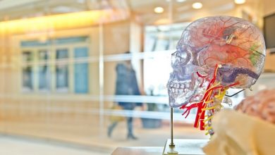 Photo of Vic's grand STEM centre holds promise for senior students
